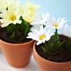 dirt cakes in flowerpots