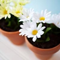 Dirt Cake in Flowerpots