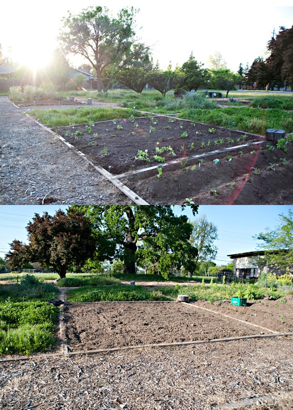 garden update week 2