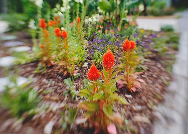 lewes garden richmond