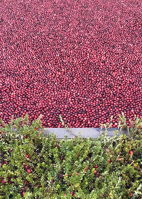 Ocean Spray Cranberry Classroom
