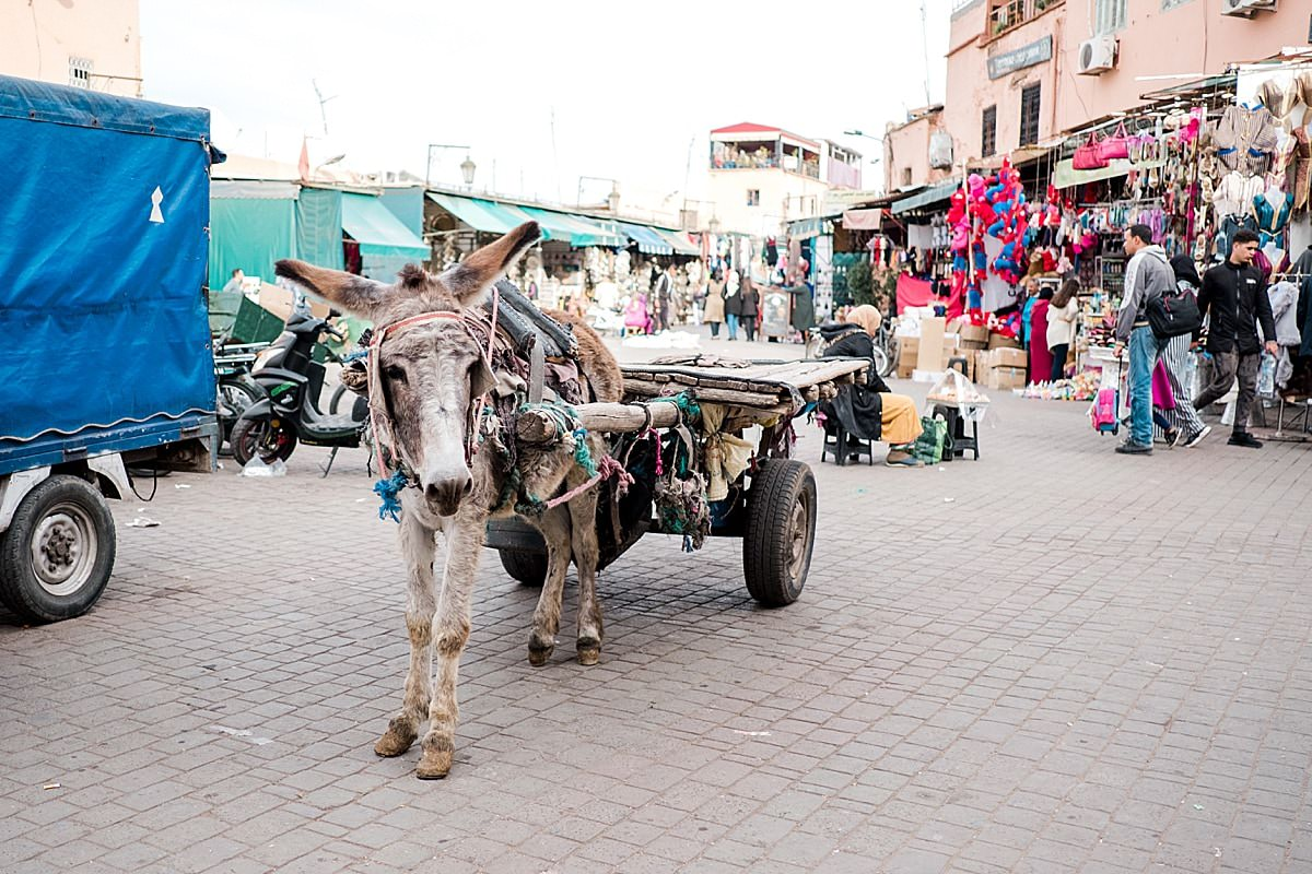 Traveling with kids - Marrakech, Morocco